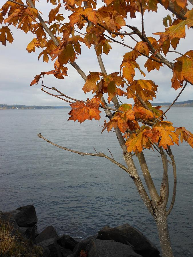 Fall Embrace by My Lens and Eye - Judy Mullan -