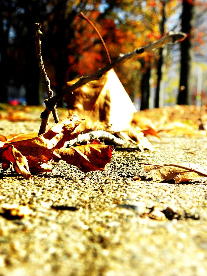 Fall Photograph - Fall by Evan Pullins