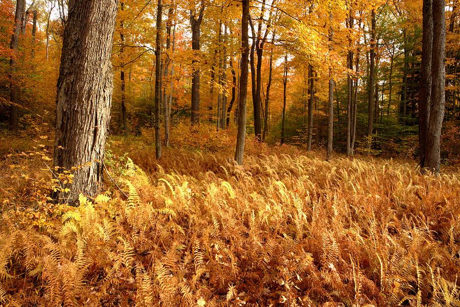 New York Photograph - Fall Ferns by Eric Foltz
