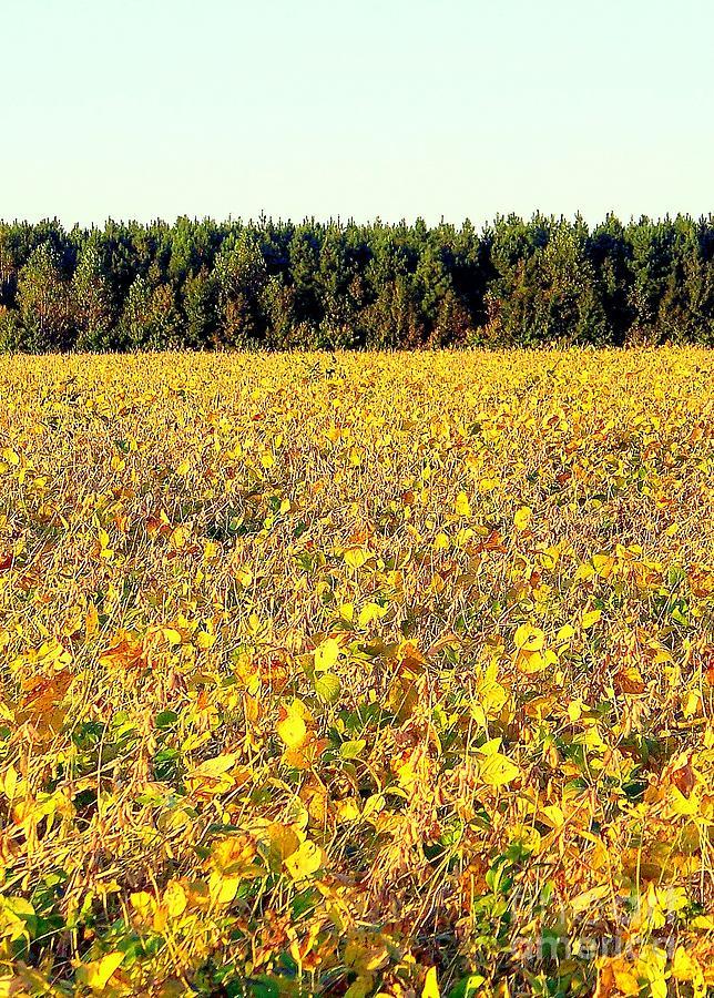Fall Photograph - Fall Field by Peyton Imes