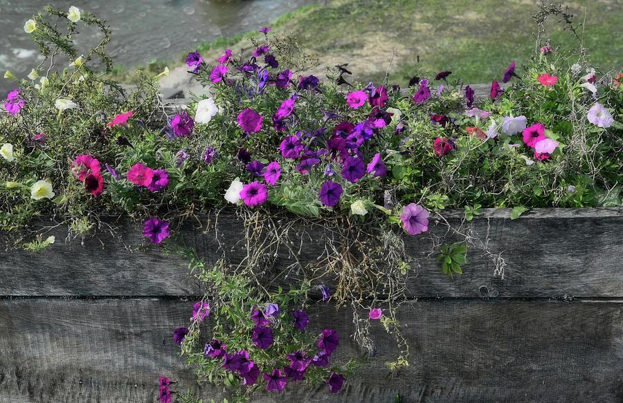 Fall Flower Box by Joanne Coyle