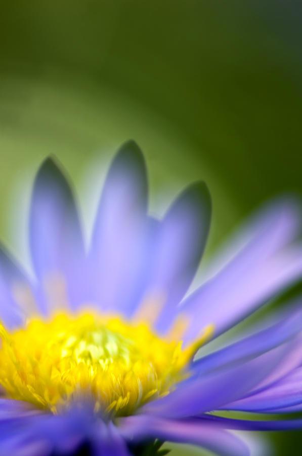 Flower Photograph - Fall Flower by Silke Magino