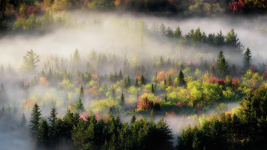 Fall Fog by Brad Wenskoski