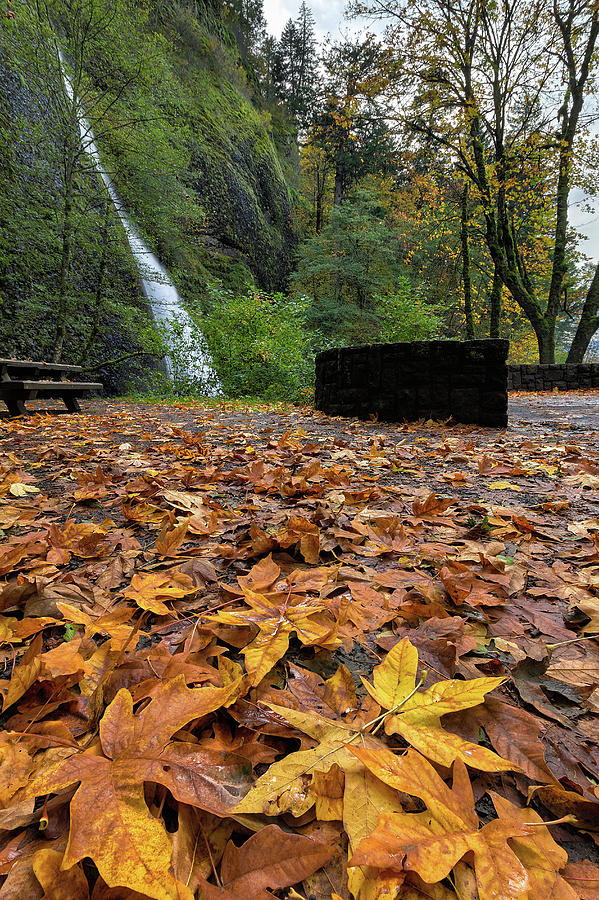 Maple Photograph - Fall Foliage At Horsetail Falls by David Gn