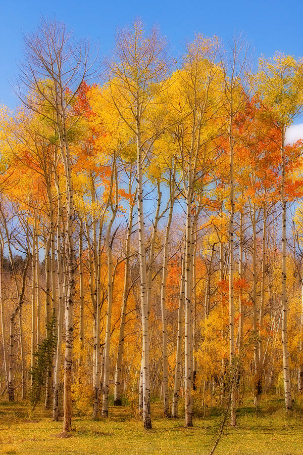 Trees Photograph - Fall Foliage Color Vertical Image Orton by James BO Insogna