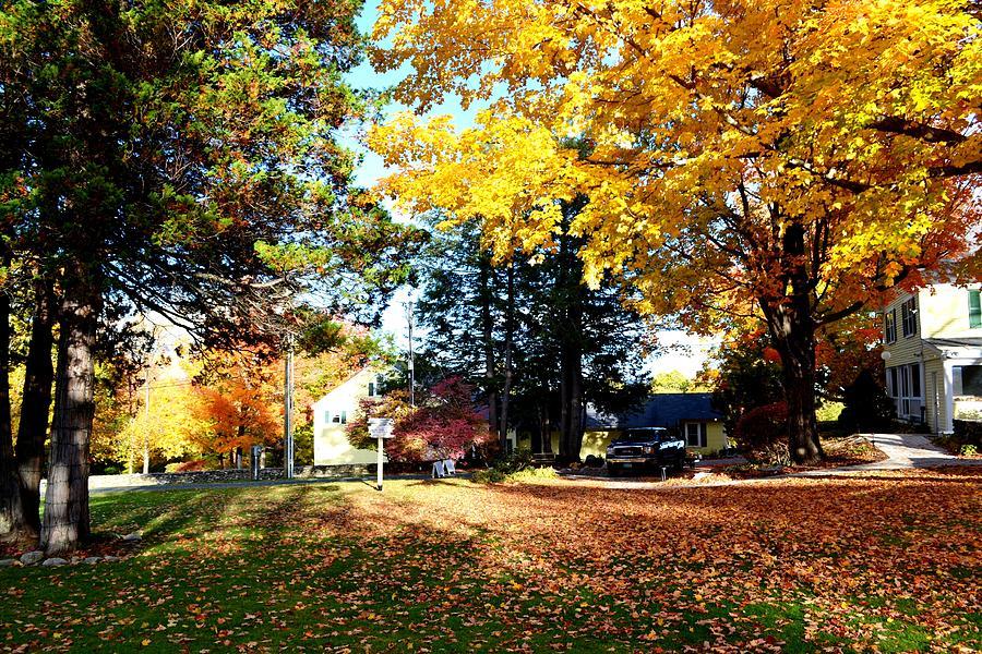 Fall Foliage by Nina-Rosa Duddy