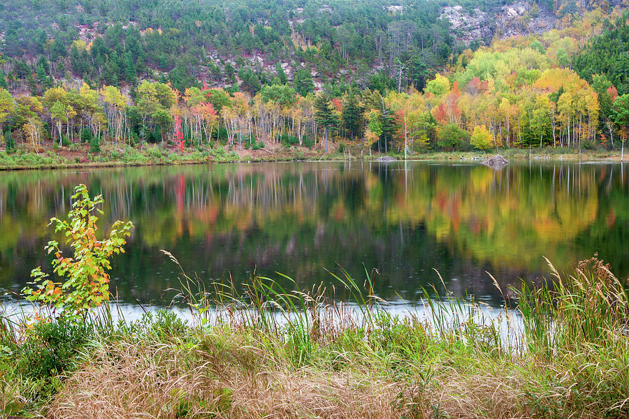 Fall Foliage Reflection in Acadia National Park by Ami Parikh