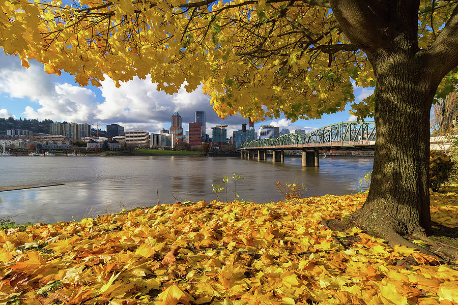 Portland Photograph - Fall Foliage with Portland Oregon City by David Gn