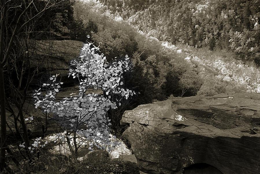 Nature Photograph - Fall Foliage by Yuri Lev