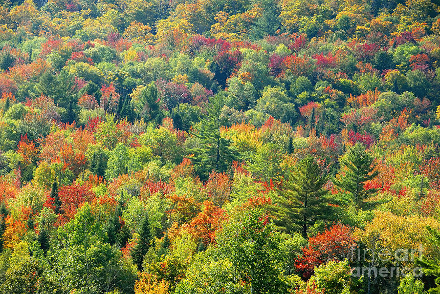Adirondack Mountains Photograph - Fall Forest by David Lee Thompson