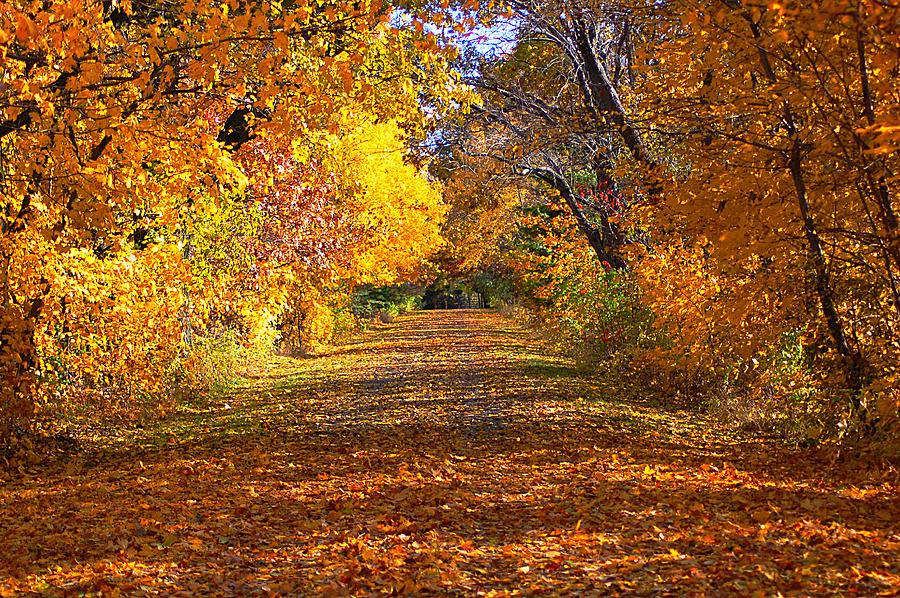 Fall Photograph - Fall by Gwen Allen