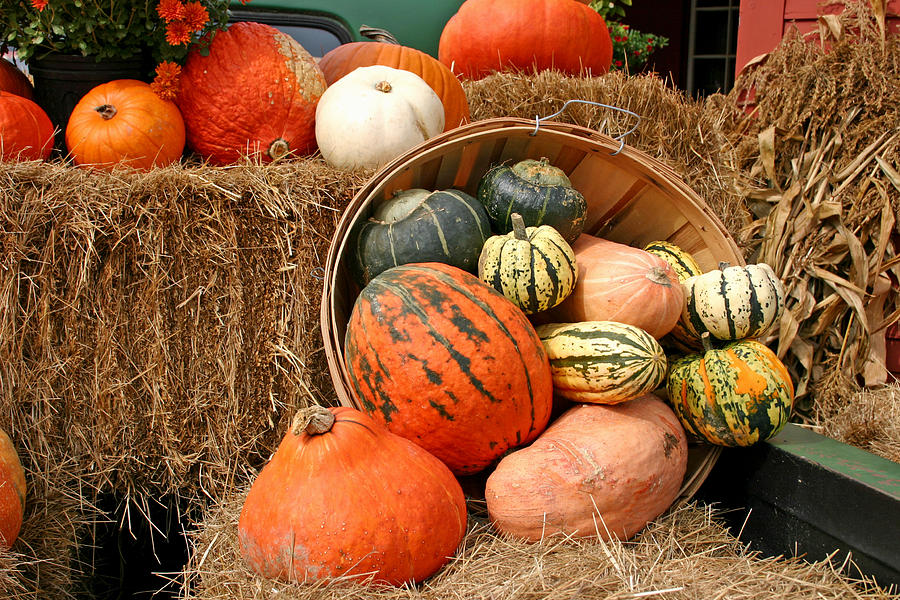 Fall Photograph - Fall Harvest by Frank Russell