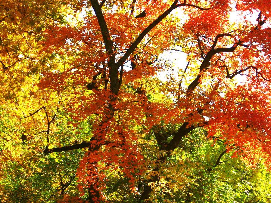 Autumn Photograph - Fall In Color by Brad Scoggins