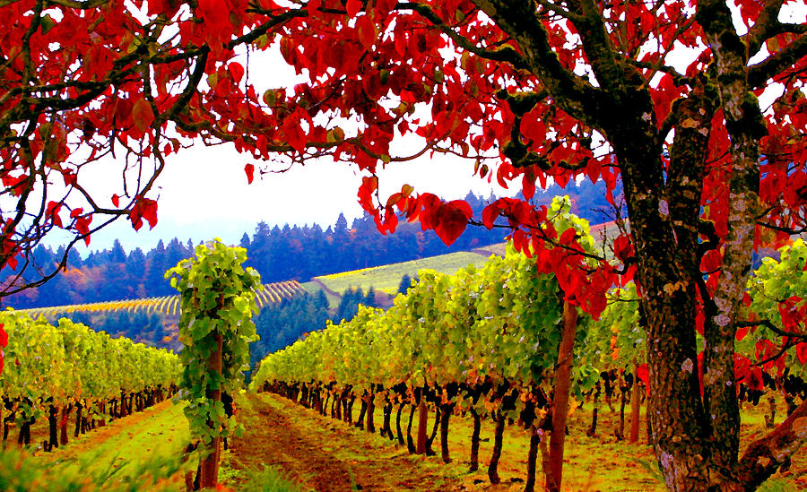 Oregon Wine Country Photograph - Fall In Dundee by Margaret Hood