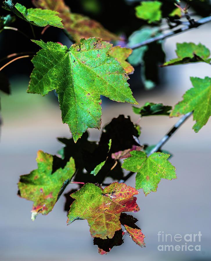 Fall Photograph - Fall In Full Swing by Baltzgar