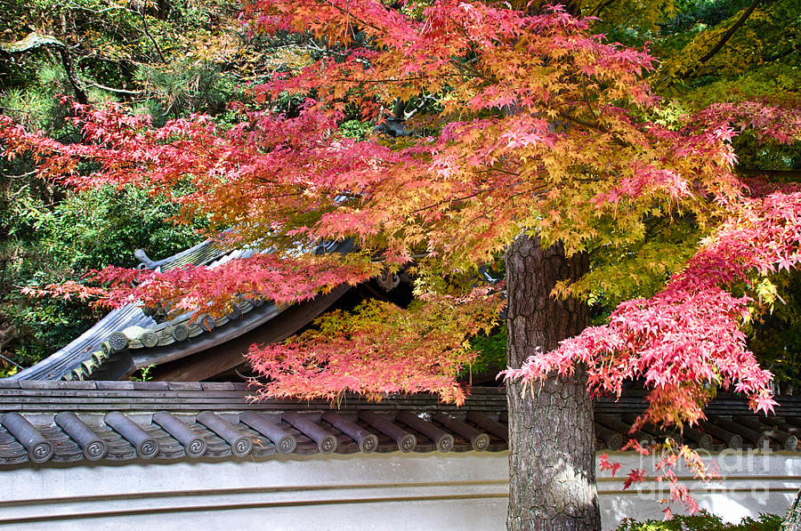 Japan Photograph - Fall in Japan by Tad Kanazaki