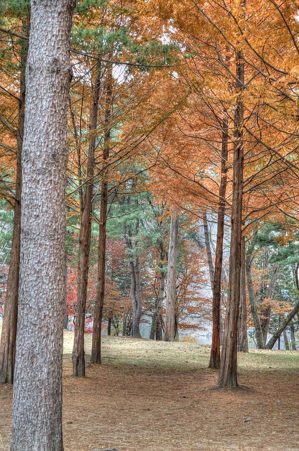Fall Photograph - Fall In Korea by Bill Hamilton