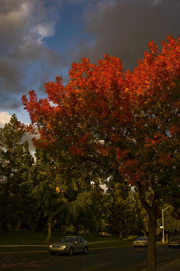 Fall In Modesto Photograph by Brigid Nelson