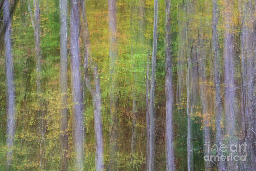 Woods Photograph - Fall In Motion by Jennifer Ludlum