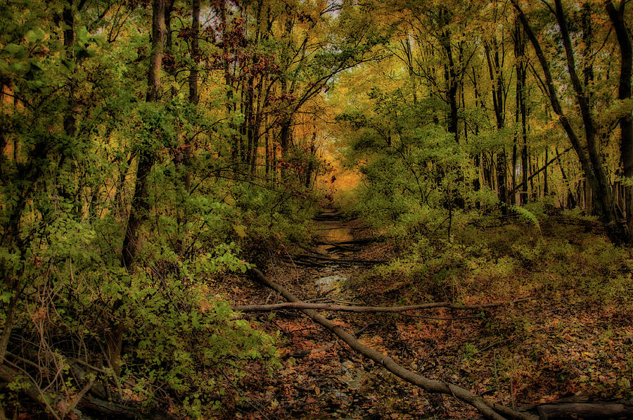 Fall Photograph - Fall In Ohio by Gaby Swanson
