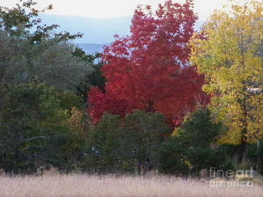 Fall Photograph - Fall In Santa Fe by Brian  Commerford