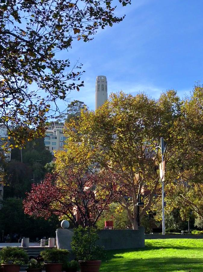 Fall in SF by Dan Twomey
