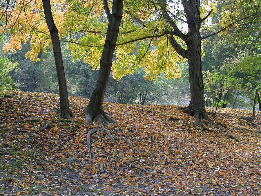 Autumn Photograph - Fall In Stony Brook by Raju Alagawadi