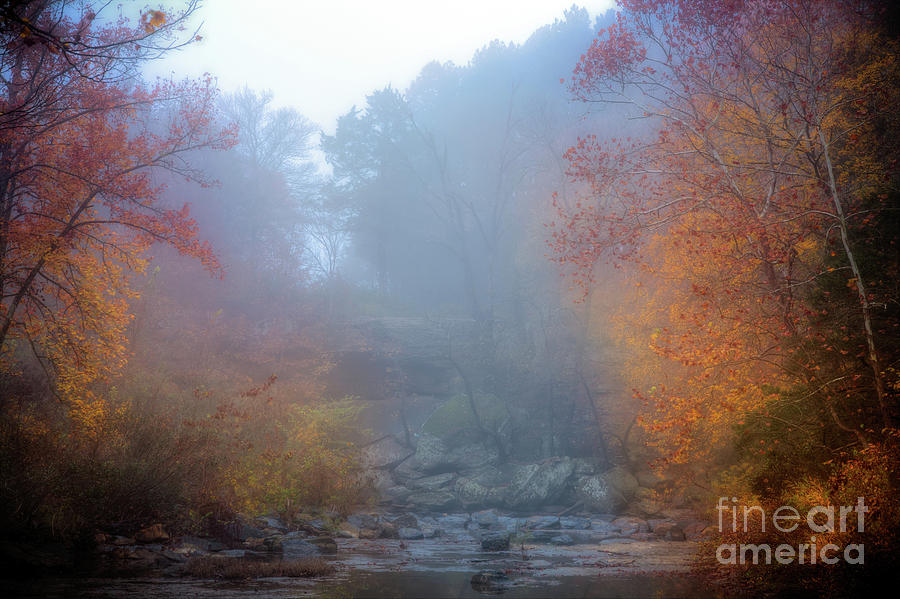 Fall in the Fog by Larry McMahon
