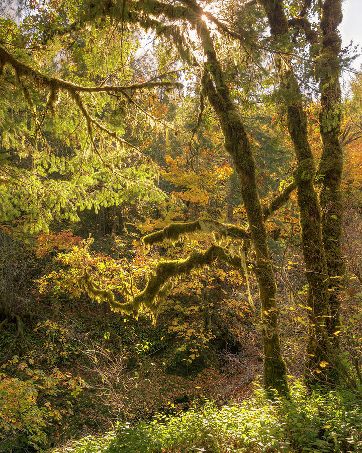 Fall In The Forest 0698 Photograph