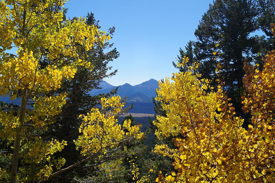 Fall in the Rockies by Broderick Delaney
