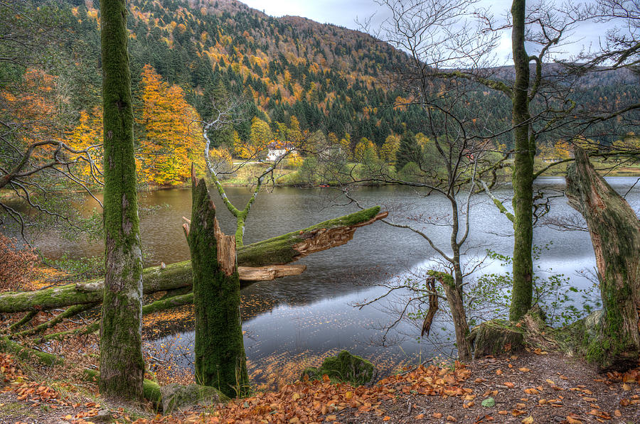 Vosges Photograph - Fall In Vosges National Park by Wim Slootweg