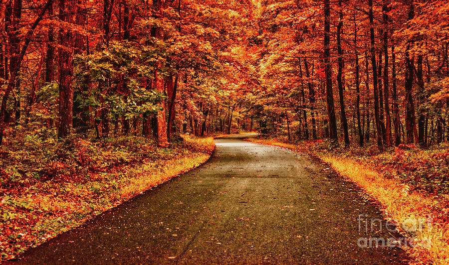 Fall into October Photograph by Heather Hubbard