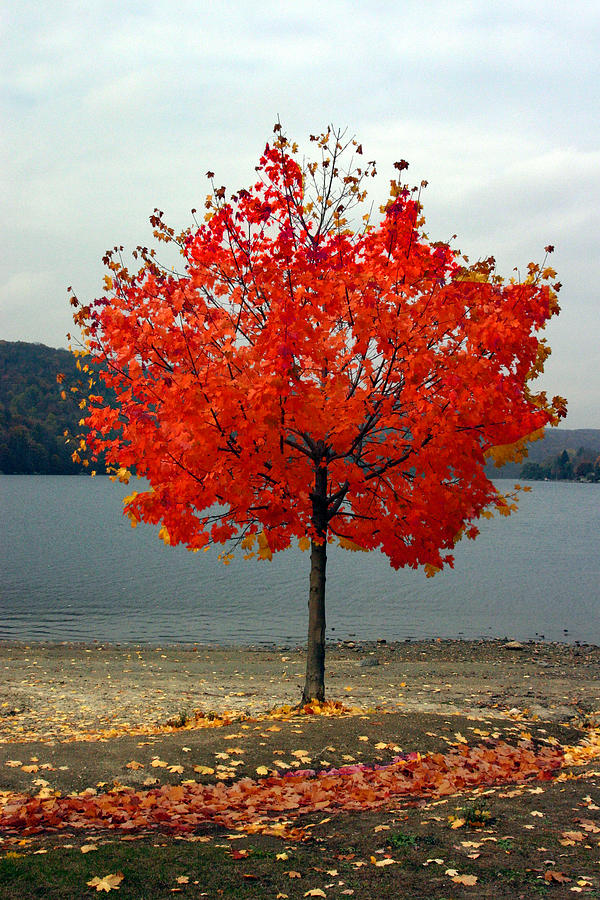 Landscape Photograph - Fall Is Here by Dennis Curry
