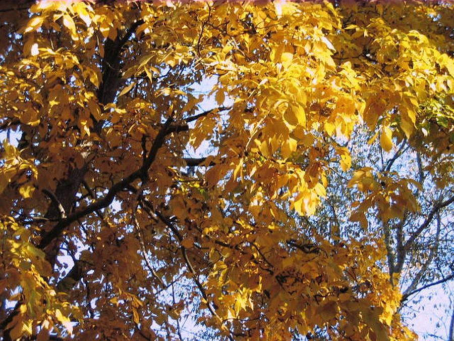 Fall Photograph - Fall Is Here by Paula Ferguson