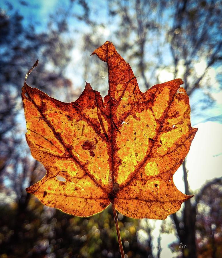 Leaf Photograph - Fall Is In The Air by Bruce Carpenter