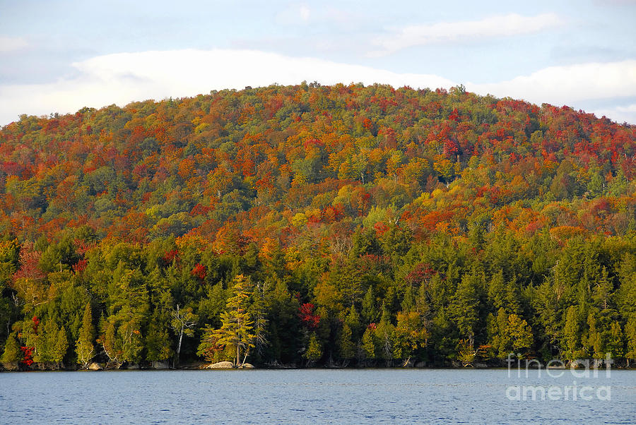 Fall Photograph - Fall Island by David Lee Thompson