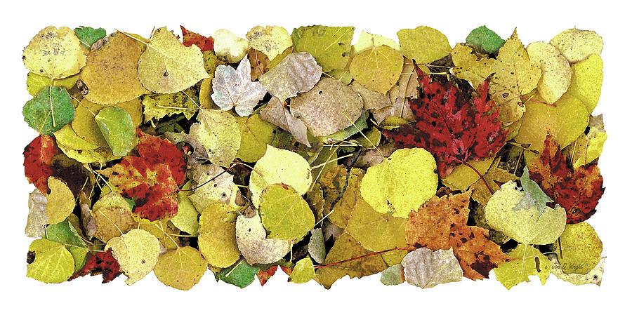 Jon Q Wright Painting - Fall Leaf Vignette by JQ Licensing