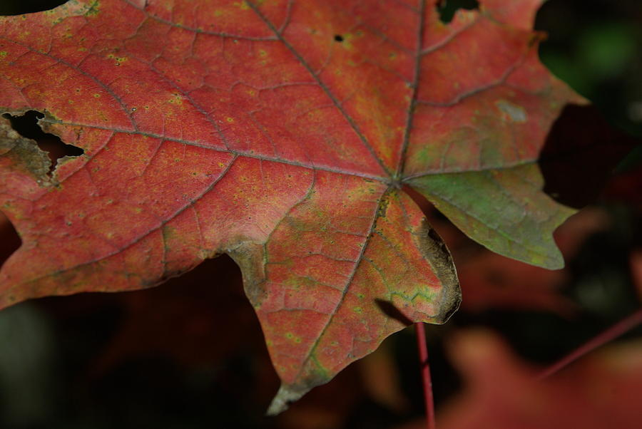 Fall Photograph - Fall Leaves 1 by Eric Workman