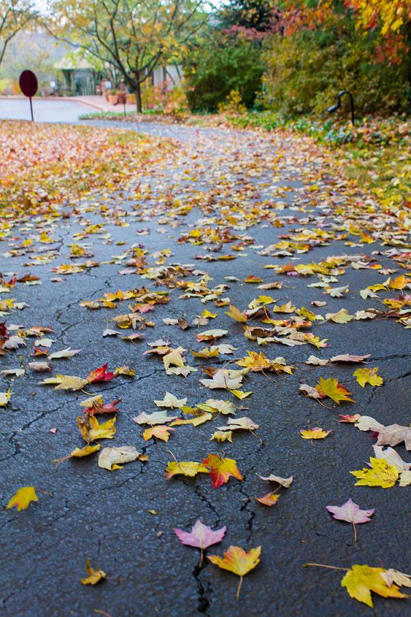 Fall Photograph - Fall Leaves by Michael Tesar