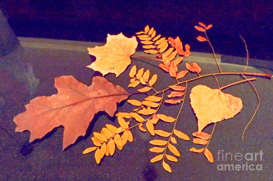 Fall Leaves On Granite Counter Digital Art by Annie Gibbons