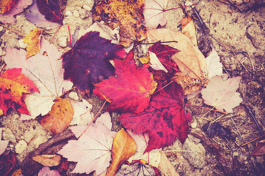 Fall Leaves on the Forest Floor by Mela Luna
