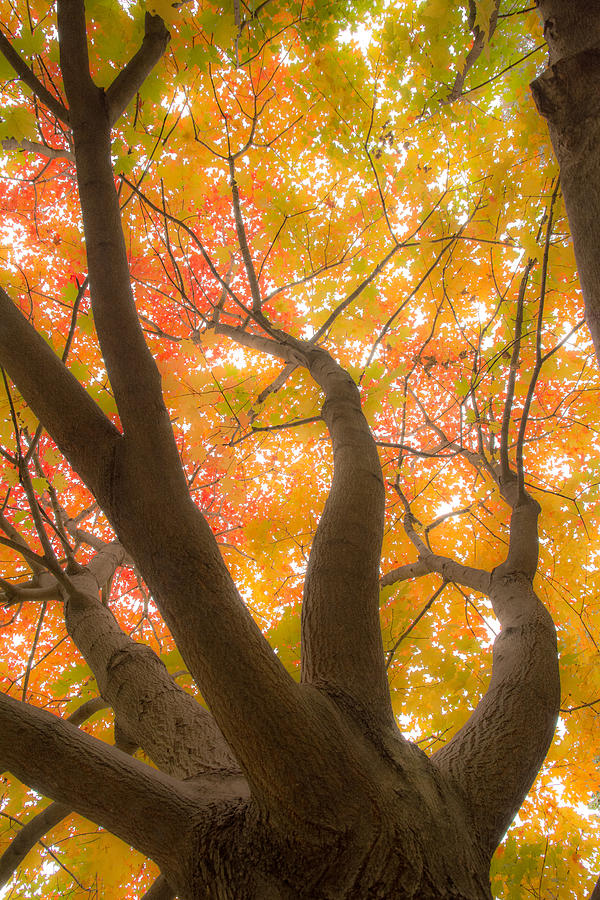 Autumn Photograph - Fall Leaves by Pati Bobeck