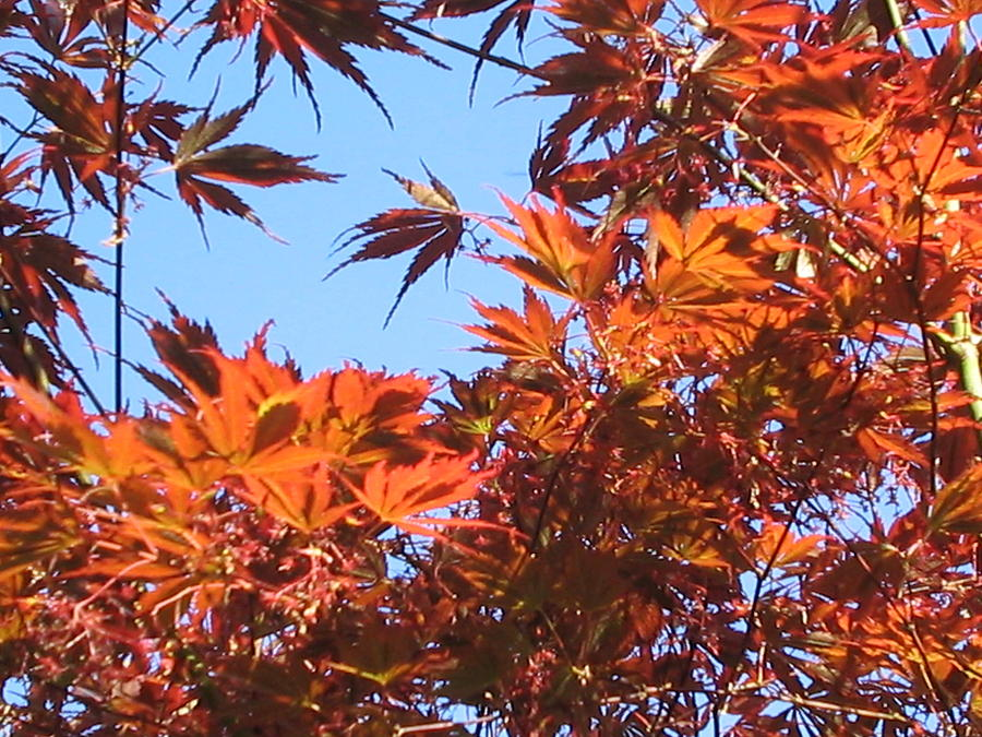 Leaves Photograph - Fall Leaves by Valerie Josi