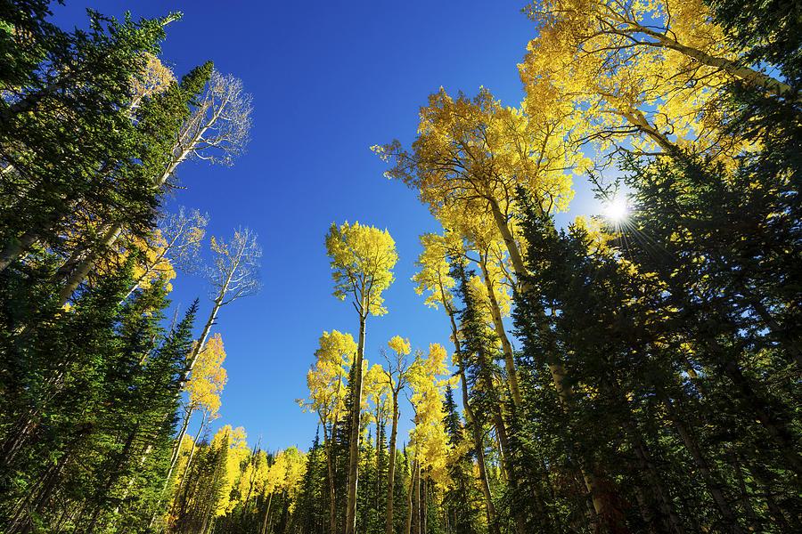Utah Photograph - Fall Light by Chad Dutson