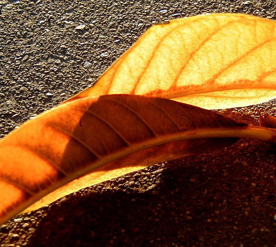 Fall Photograph - Fall by Mark Stevenson