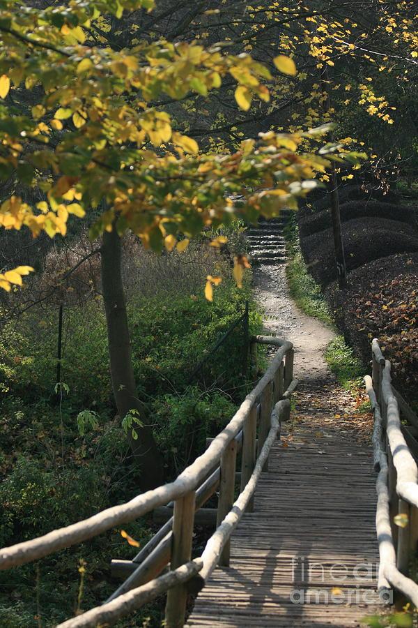 Fall Photograph - Fall by Marta Grabska-Press