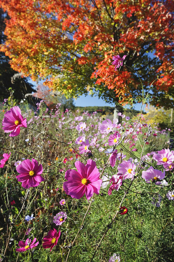 Autumn Photograph - Fall Meadow With Wildfowers by George Oze