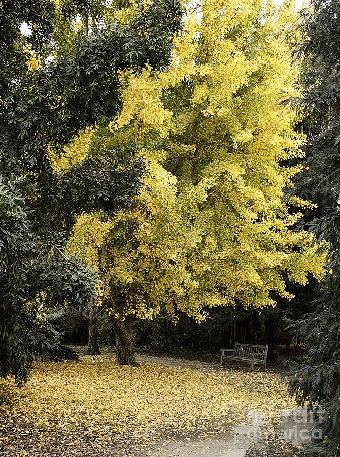 Nature Photograph - Fall Now by Viktor Savchenko
