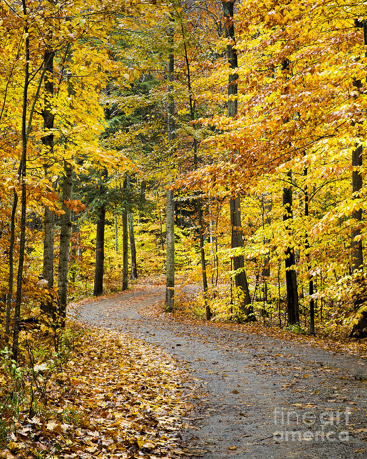 Fall Photograph - Fall on the Road to School Lake by Twenty Two North Photography