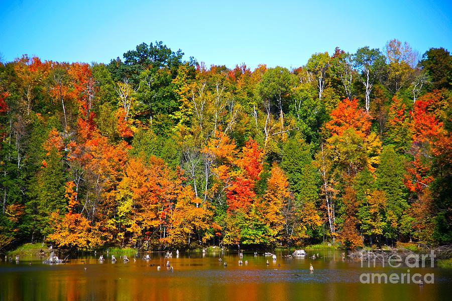 Fall Photograph - Fall On The Water by Robert Pearson